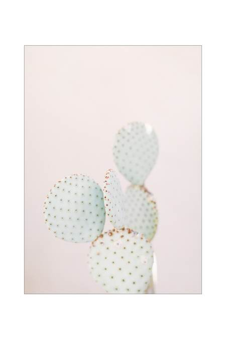 LOFT CREATIVE cactus print no. 18