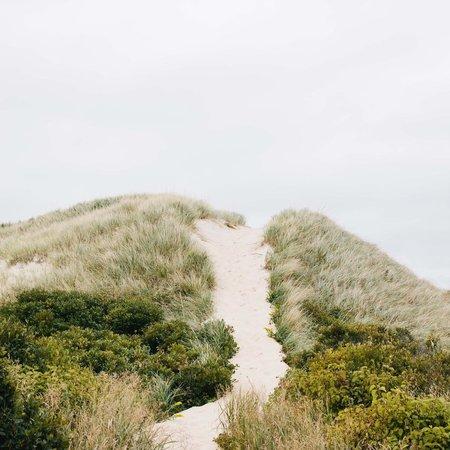 Elizabeth Cecil Dune