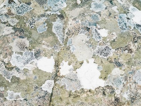 Maddy Maeve Moss Rocks No. 1 Art Print