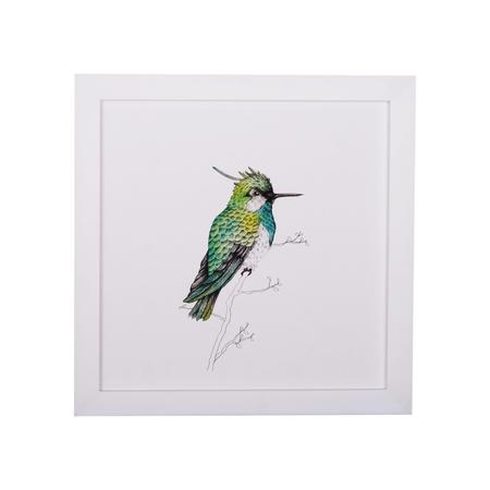 KIDS Petit Kolibri Lukas hummingbird illustration