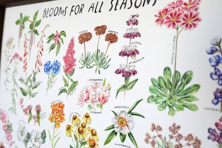 Maria Schoettler Blooms for All Seasons Print
