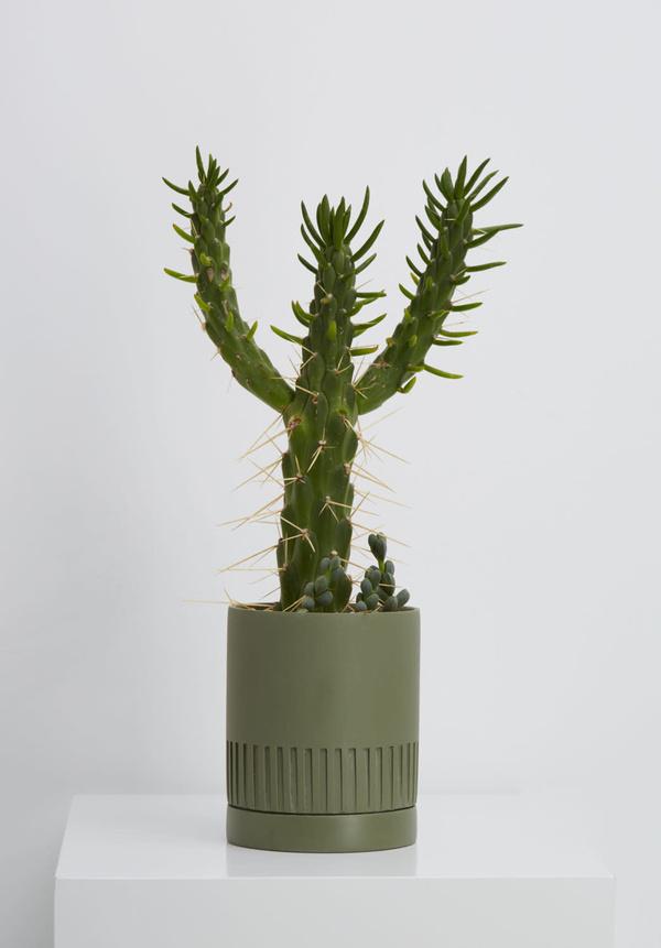 Capra Small Etch Planter - Agave