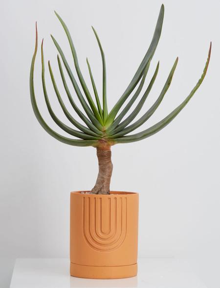Capra Small Etch Planter - Desert