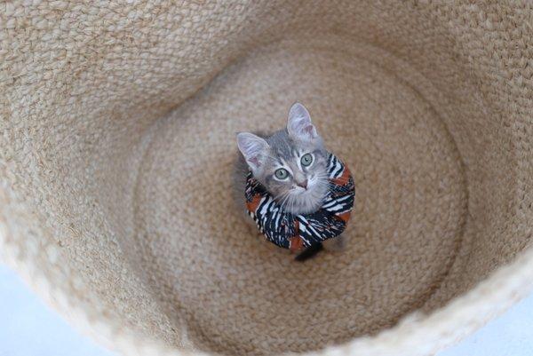 Beklina Scrunchies Sets French Ribbon