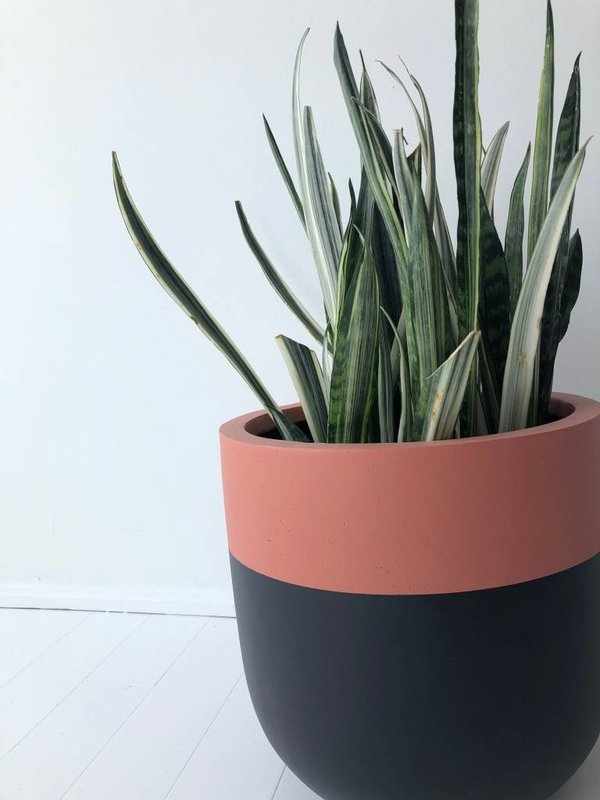 Common House Studio divided small pot