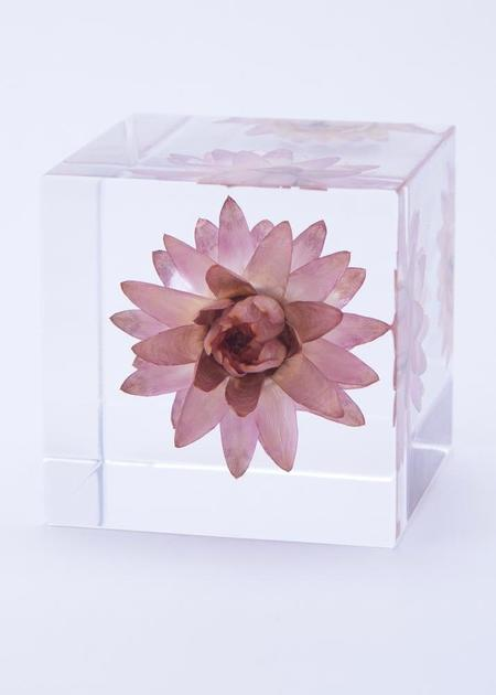 Usagi No Nedoko Sola Cube - Strawflower