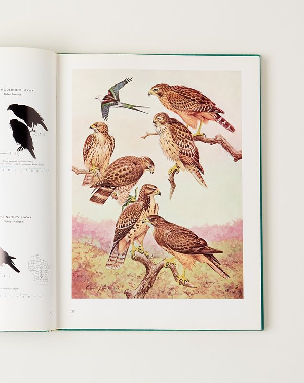 Vintage Birds of Wisconsin BOOK