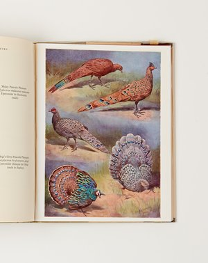 Vintage The Pheasants of the World BOOK