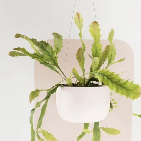 Angus & Celeste Raw Earth Hanging Planter - Pink