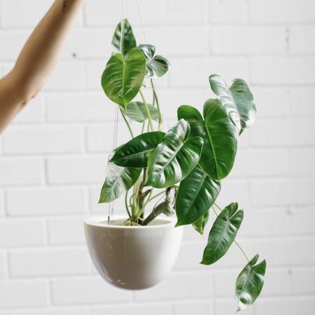 Angus & Celeste Small Hanging Planter - White