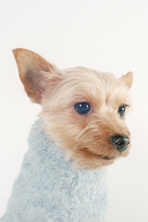 Maria Stanley Dog Sweater - Cloud
