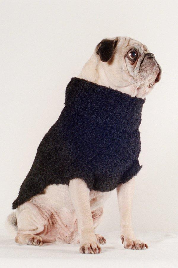 Maria Stanley Dog Sweater - Noir