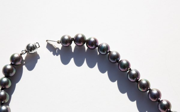 Kindred Black Jetsam's Collar
