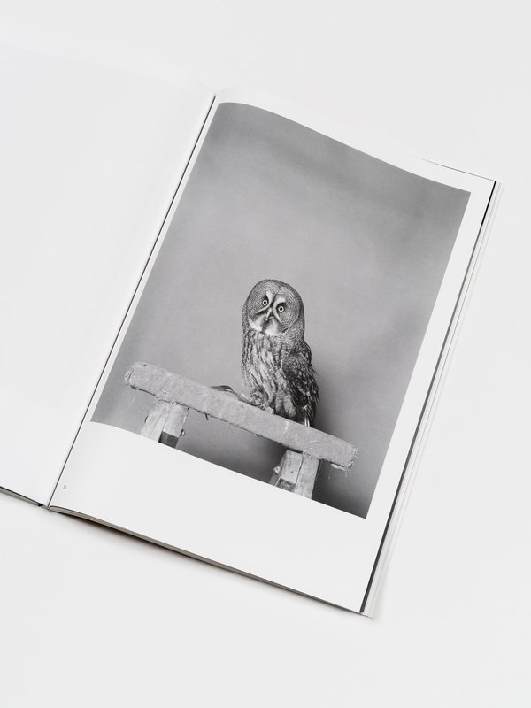 Here Press Parliament Of Owls by Jack Latham