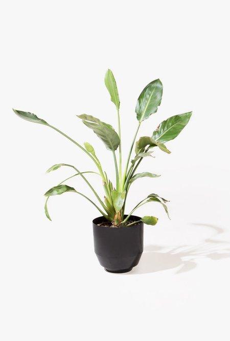 Yield Spun Planter - Black