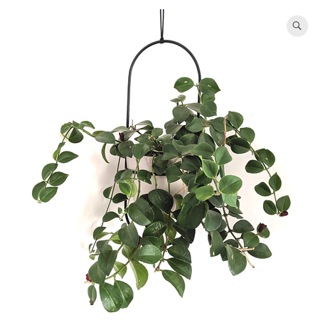 Kord Design Ellipsi hanging planter