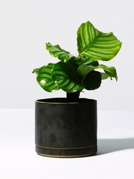 Hasami Porcelain Black Planter