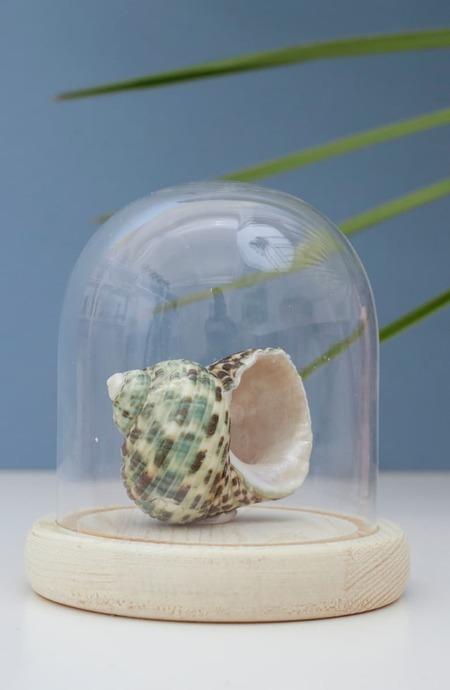 Kikkerland Bell Jar Glass with Wooden Base