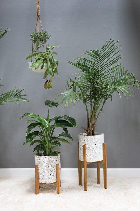Accent Decor Dale Plant Stand