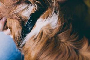 Noah Marion Slim Dog Collar