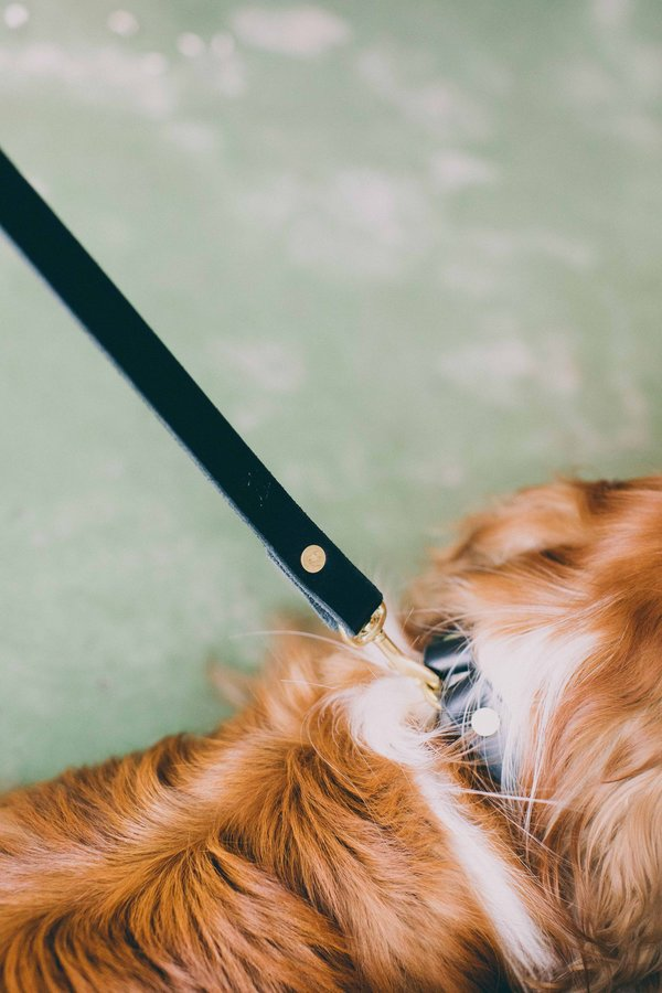 Noah Marion Small Dog Leash