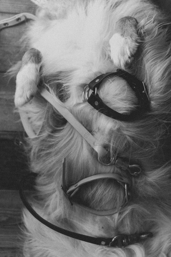 Noah Marion Dog Collar