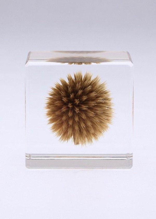 Usagi No Nedoko Globe Thistle Sola Cube