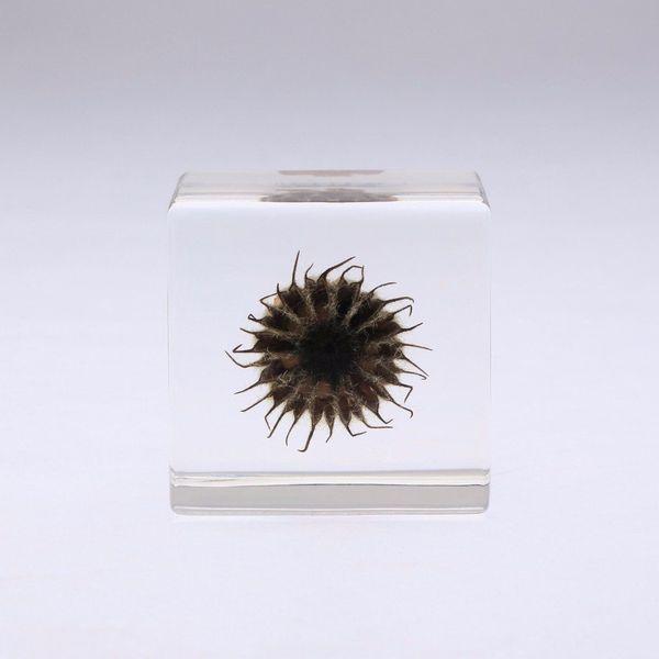 Usagi No Nedoko Sola Cube - Velvet Leaf