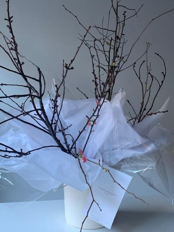 *Pre-order* Valentine's Florals - Quince Branches