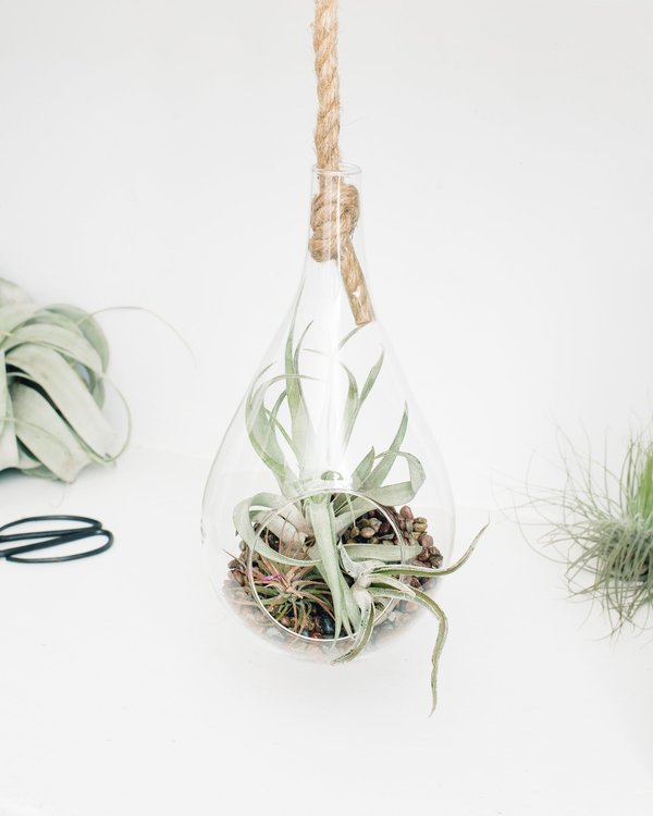 Modern Glass Hanging Rope Teardrop - Terrariums